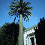Giardini Villa Melfi  (15)